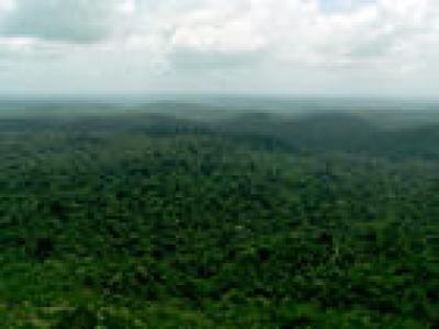 Nature Communications - Hyper dominance du cycle de carbone Amazonien
