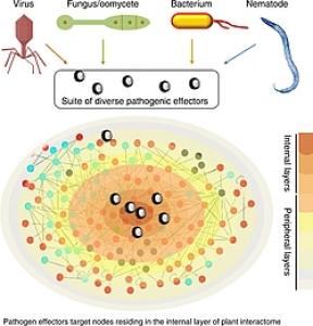 5/07: Y. Belkhadir - Molecular logic in large-scale ligand-receptor interaction networks