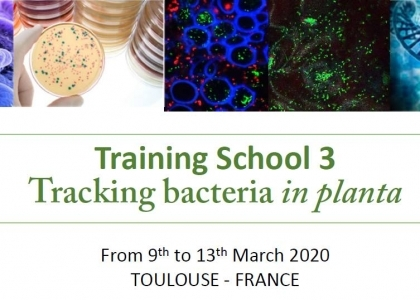 Conférences Tracking bacteria in planta