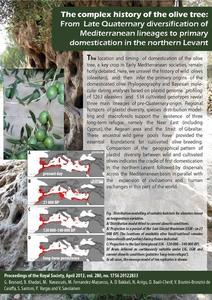 The complex history of the olive tree