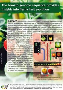 Panneau tomato genome sequenced