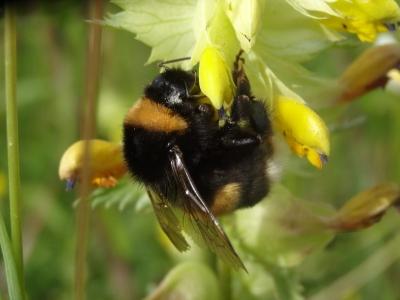 """Journée thématique """"Pollinisation : plantes, insectes, (agro)-écosystèmes"""""""