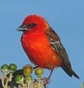 Vignette bird